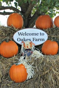 Oakes Farm Corn Maze Review