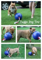 Tuggo Dog Toy Review