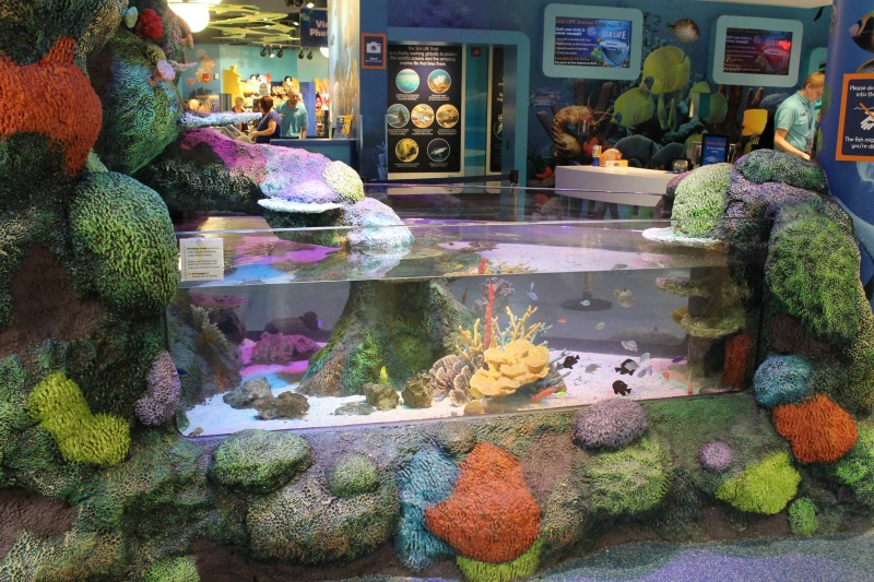 Entry Way at Sea Life Aquarium Michigan