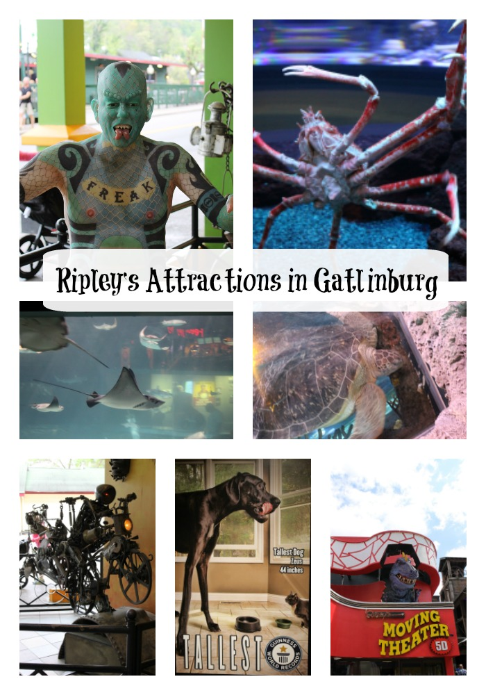 Ripley's Attractions in Gatlinburg