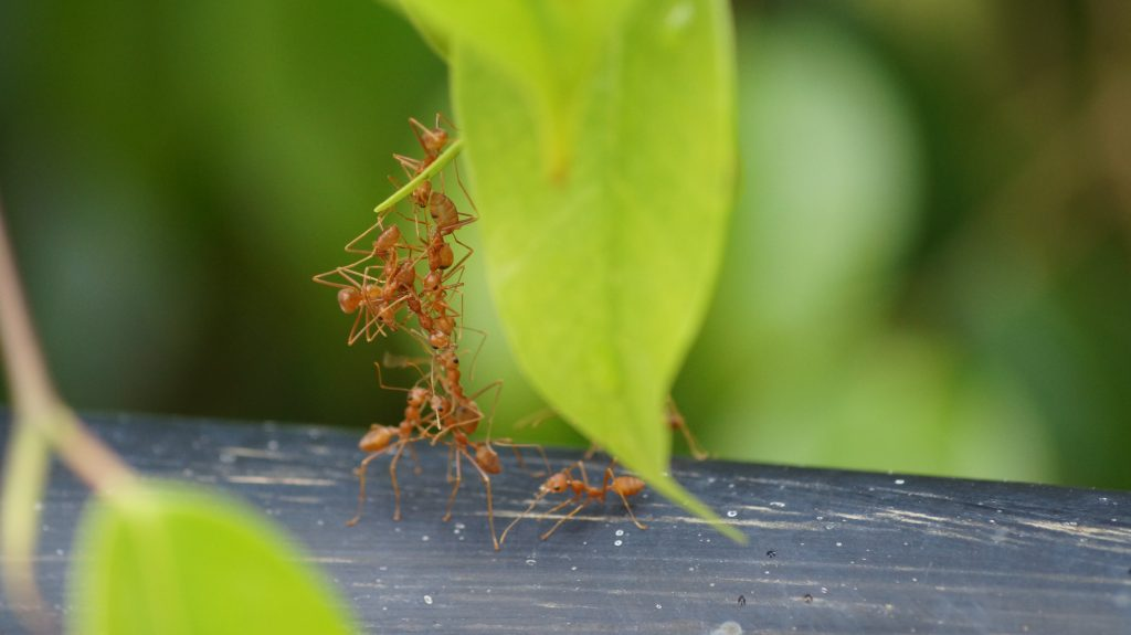Ants carrying a leaf - Support System