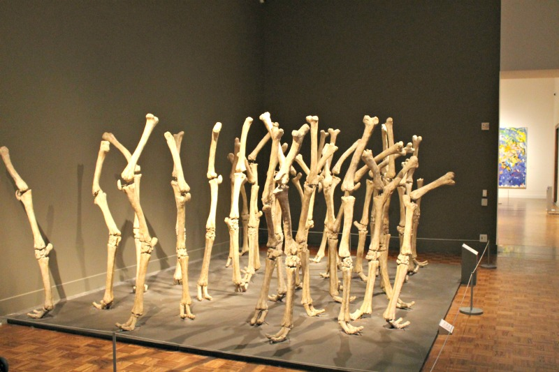 Bones Sculpture Display DIA