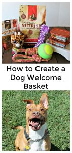 Welcome Home Basket for Dogs
