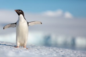First Trailer for Disneynature's PENGUINS – #DisneynaturePenguins