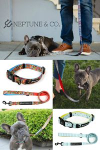 Neptune & Co. Leash and Collar Giveaway – Ends 10/25